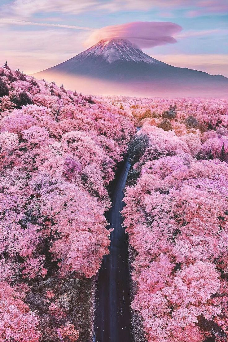 Great Absolutely Free Blossoms Fondos Popular Cherry Blossoms Usually Are Many Of The Most Beautiful In 2021 Cherry Blossom Japan Beautiful Nature Beautiful Landscapes
