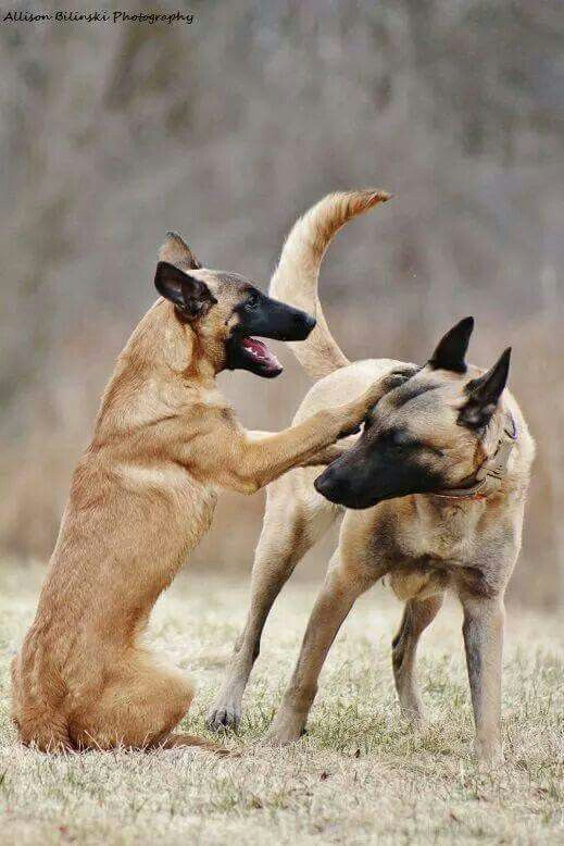 Two mals playing