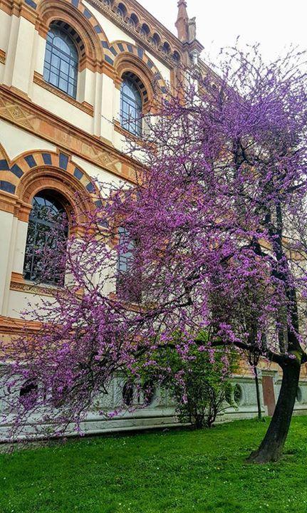 Colori di primavera ai giardini Montanelli  Foto di Antoine Laguerre #milanodavedere Milano da Vedere