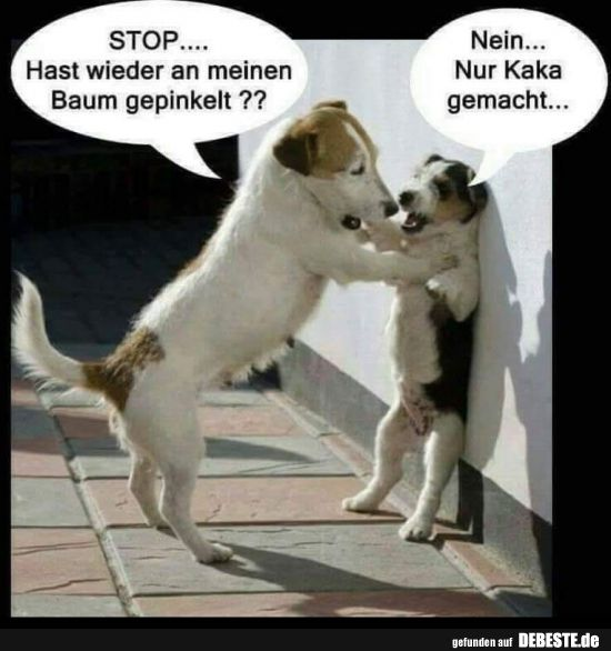 STOP … have peed again on my tree ??   Funny pictures, sayings, jokes … – Hunde