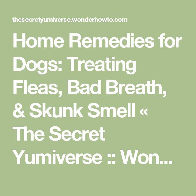 25 best skunk smell ideas on pinterest skunk spray dog skunk removal and skunk smell remover. Black Bedroom Furniture Sets. Home Design Ideas