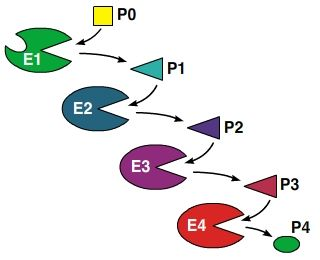 The figure shows a hypothetical enzymatic pathway with four enzymes, labeled E1, E2, E3, and E4. The initial substrate is P0. The enzymes make products, labeled P1, P2, P3, and P4, respectively. Each product is a substrate for the next enzyme, except the P4 product, which can bind to the E1 enzyme, but not to the active site.