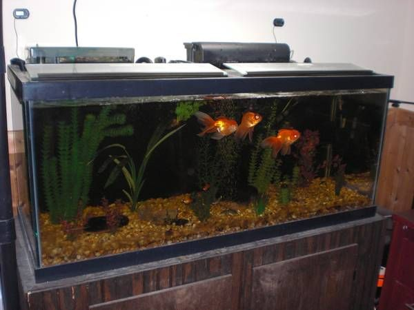 Best 25 75 gallon aquarium ideas on pinterest 75 gallon for How to reseal a fish tank