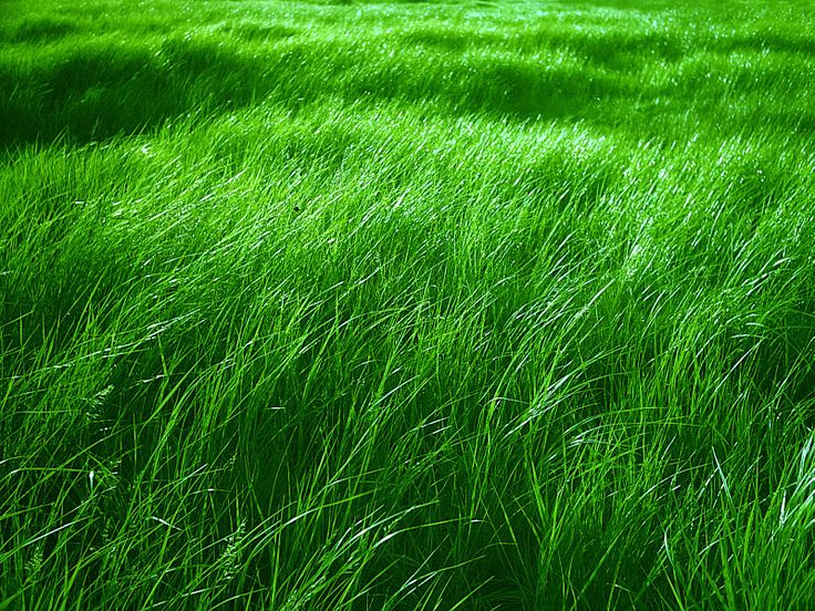 Beautiful green grass beautiful grass pinterest for Pretty grass