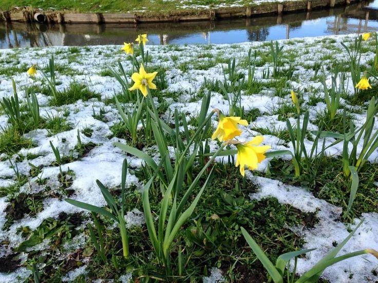 Vroeg voorjaar