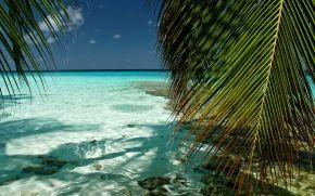 l'oceano, palme, spiaggia, paesaggio