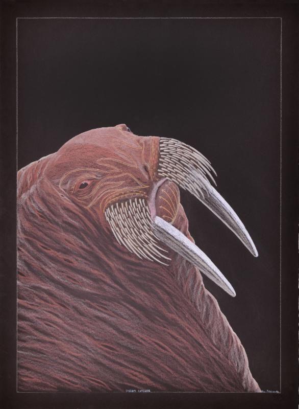 Tim Pitsiulak - Dream Catcher coloured pencil drawing