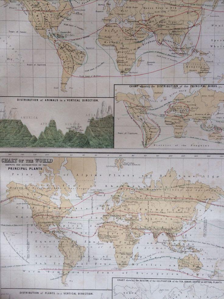 1859 ZOOLOGY and BOTANY large rare original