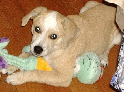 baby dog and toy
