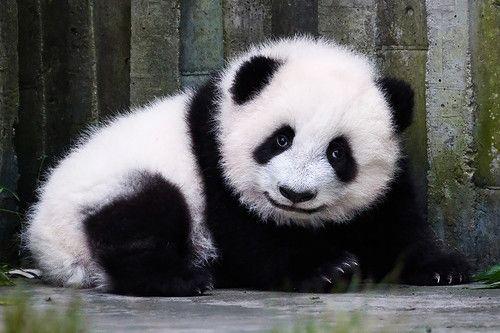 Улыбка панды