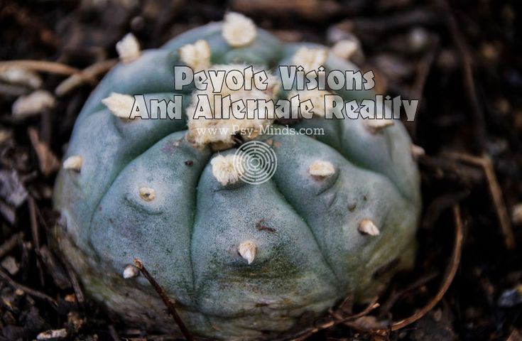 Peyote Visions And Alternate Reality - via @psyminds17