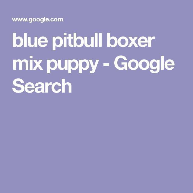 blue pitbull boxer mix puppy - Google Search