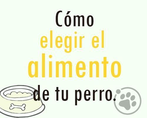 Cómo elegir el alimento de tu perro https://www.facebook.com/notes/orbita-pets/amigos-orbita-petsc%C3%B3mo-elegir-el-alimento-de-tu-perro/548135765330050