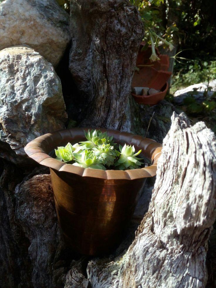 cache pot en cuivre et plantes grasses broc rezfamily pinterest plantes grasses cuivre et. Black Bedroom Furniture Sets. Home Design Ideas