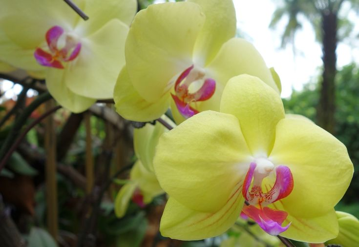 orchideen  die häufigsten fehler bei der pflege der