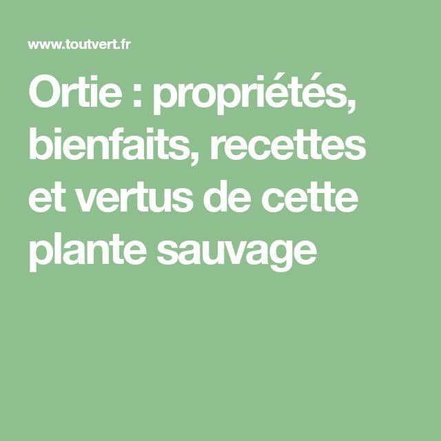 Ortie : propriétés, bienfaits, recettes et vertus de cette plante sauvage