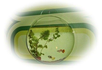 Muur aquarium