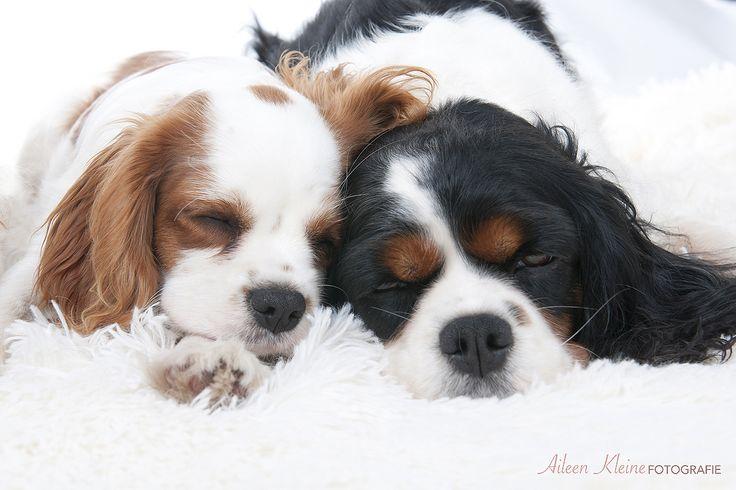 Slapende honden   Aileen Kleine Fotografie. www.aileenkleine.nl