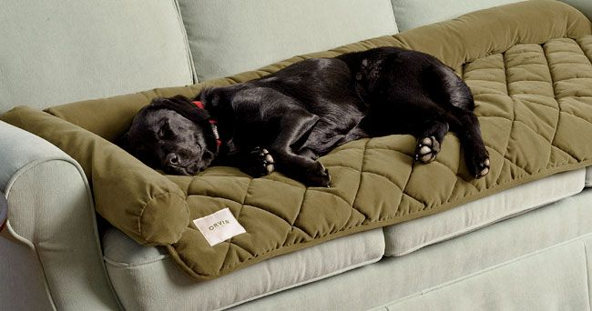 Just found this Dog Couch Covers - Furniture Protector -- Orvis on Orvis.com!