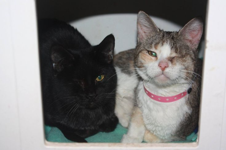 Toledo Area Humane Society rescues dozens of cats from home  ||  The Cruelty Division say the animals were living in deplorable conditions in Toledo. http://www.13abc.com/content/news/Toledo-Area-Humane-Society-resuces-dozens-of-cats-from-home-466020583.html?utm_campaign=crowdfire&utm_content=crowdfire&utm_medium=social&utm_source=pinterest