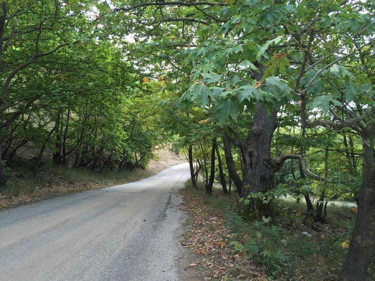 28.  Forest sight from the road.  Kalavrita, Greece (Zachlorou area)