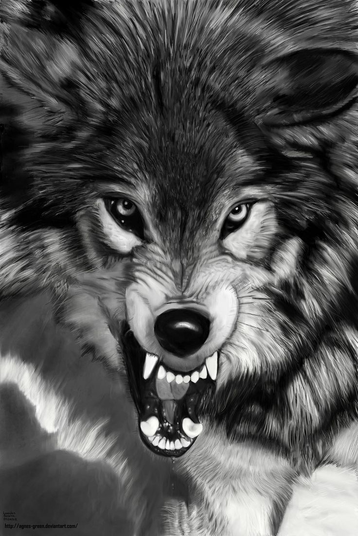 Wolf by agnes-green.deviantart.com on @deviantART