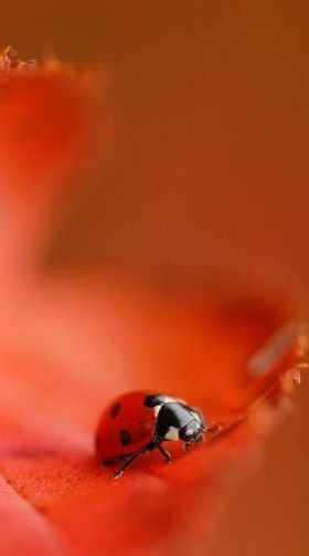 ladybug | Very cool photo blog