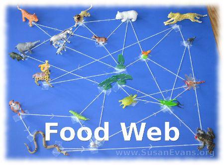 Food Web Activity - http://susanevans.org/blog/food-web-activity/