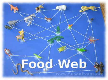 Food Web Activity - http://susanevans.org/blog/food-web-activity/