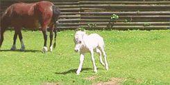 cute horse gifs   13 Disgustingly Cute Baby Horse GIFs