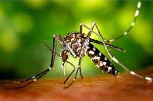Планета Земля и Человек: Заставьте насекомых отвязаться этим летом