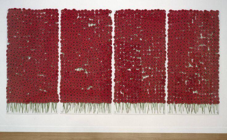 Anya Gallaccio, 'preserve 'beauty'' 1991–2003