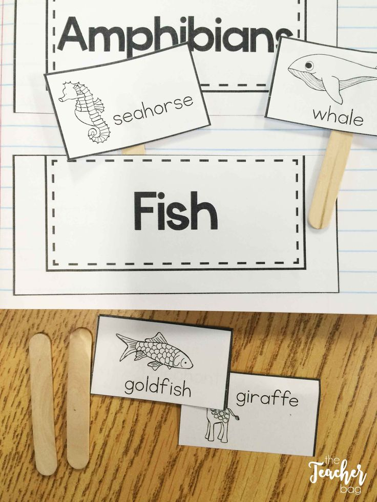 Animal classification interactive notebook activities