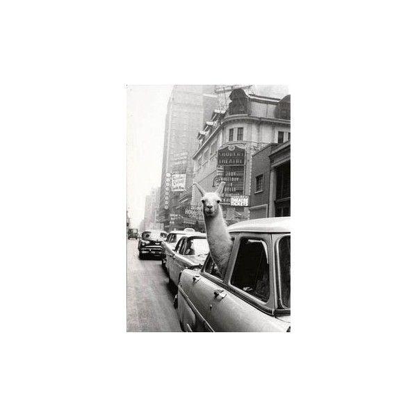 BLACK & WHITE na Pinterestu | Expoziční Čas via Polyvore