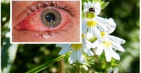 Βότανο Βελτιώνει την Όραση ακόμα και σε άτομα άνω των 70 ετών!: http://biologikaorganikaproionta.com/health/252332/