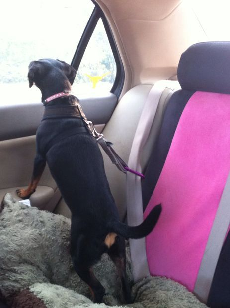 Picture and instructions of Dog Car Harness Safety Seat.diy