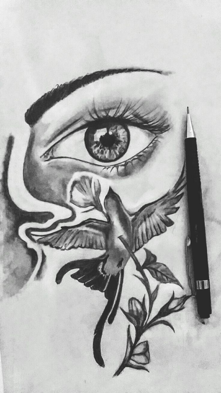 Sketch sketching eye bird drawing
