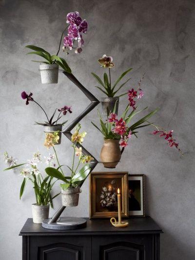 Fran ois hannes d corateur d int rieur l orchid e n est - Arrosage orchidee d interieur ...