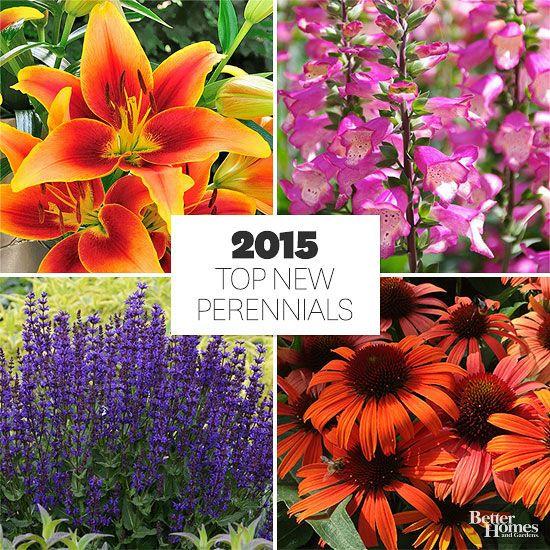 New Garden Ideas 2015 331 best lawn and garden images on pinterest | flower gardening