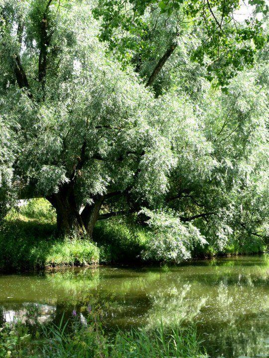 River scene,Crailsheim,Germany