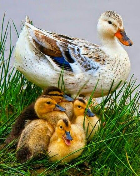 Easter ducklings!