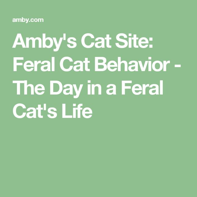 Amby's Cat Site: Feral Cat Behavior - The Day in a Feral Cat's Life