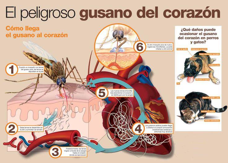 Proteger a tu mascota de enfermedades                                                                                                                                                                                 Más