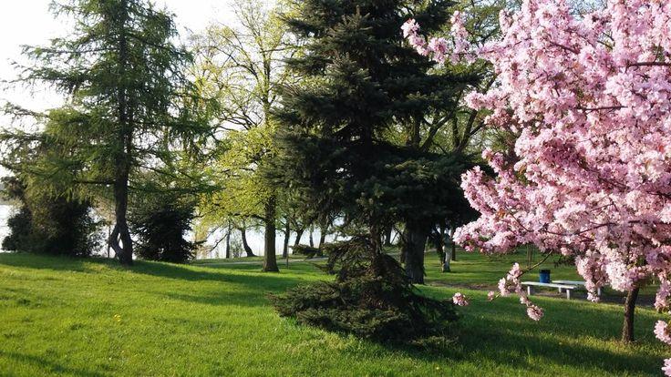 #wagrowiec #wielkopolska #polska #poland #wągrowiec #jeziorodurowskie #lake #wiosna #sprint #trees