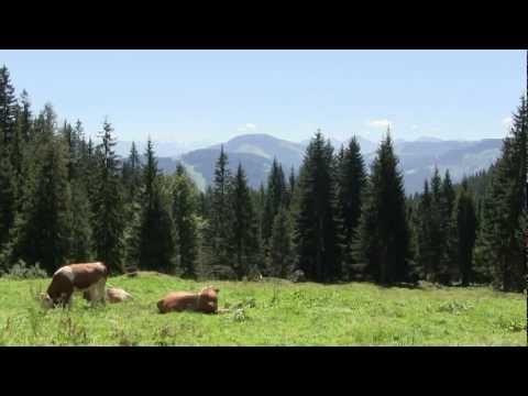 Yoga und Wandern in den Tiroler Alpen: Yogaferien im Sivananda Yoga Seminarhaus