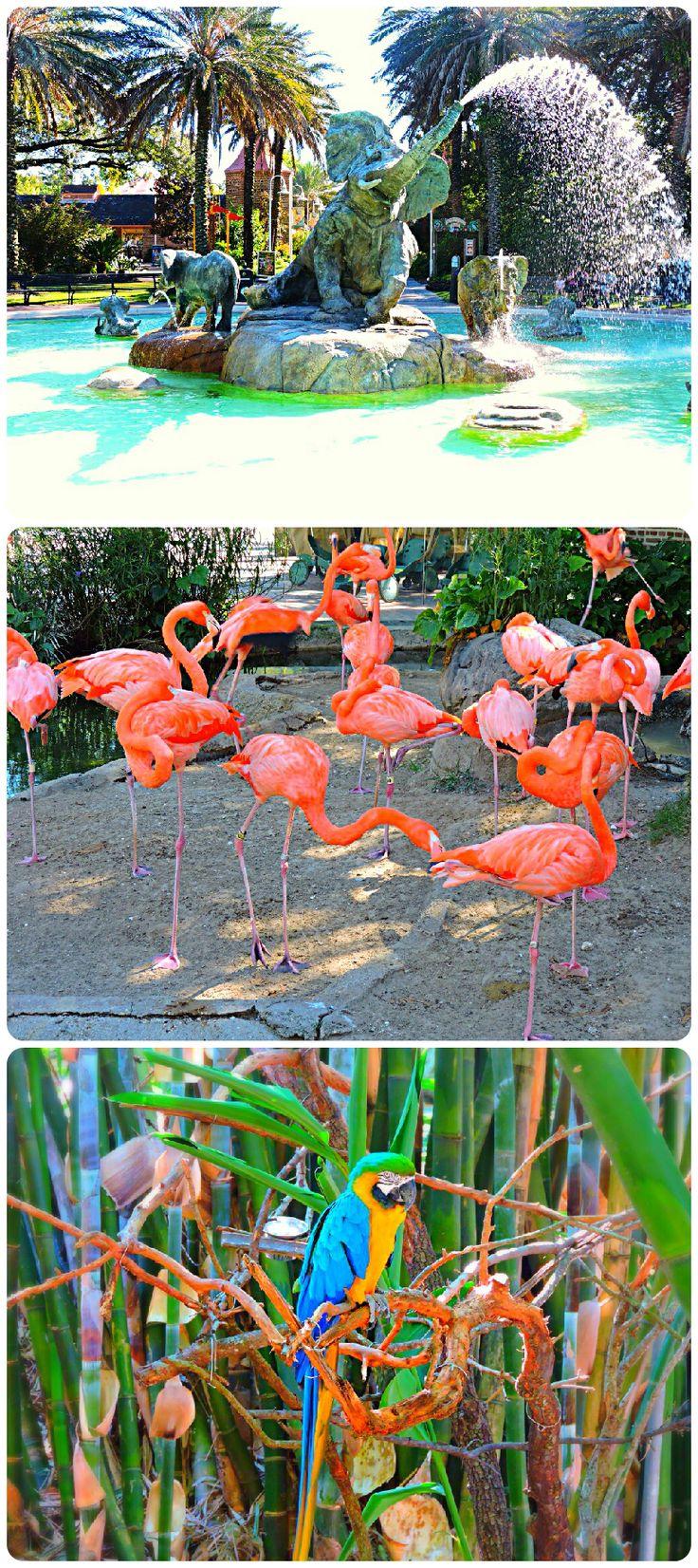 The Audubon Zoo in New Orleans, LA
