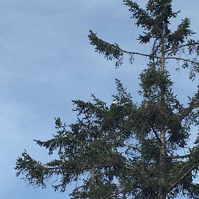 【rosejamlushie】さんのInstagramをピンしています。 《#eagleontree #eagle #kingofbirds #deceptionpassbridge #statepark #WA #logs #camping #summer #trees #woods #bluesky #pnw #sky #sun #clouds  #鷲 #イーグル #ディセプションパス州立公園 #橋 #キャンプ #夏 #2016 #ワシントン州 #青空 #森林浴 #森林 #雲 #空 #太平洋岸北西部》