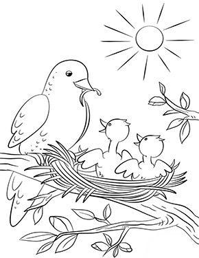 ausmalbild frühling - vögel im nest in 2020 | vogel