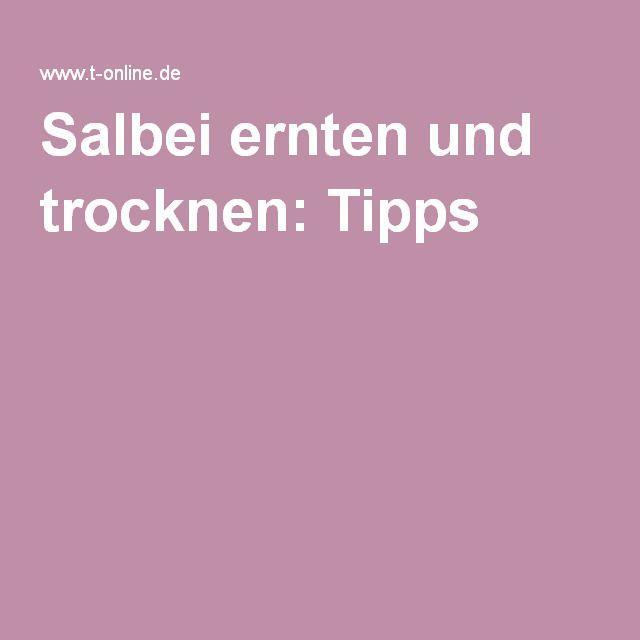 Salbei ernten und trocknen: Tipps