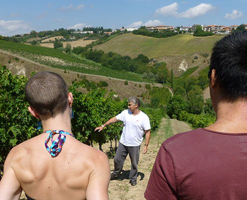 vinyard visit